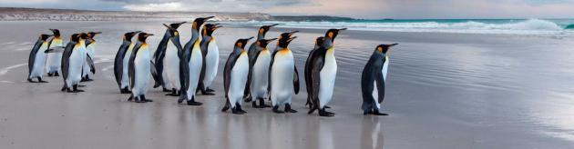 antarctica_banner_image[1].jpg